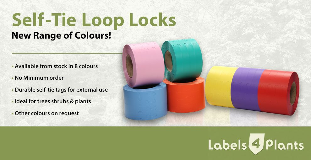 Self Tie Loop Locks